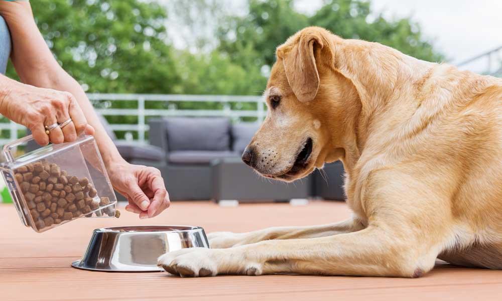 Корм для собаки — не только полезно, но и вкусно