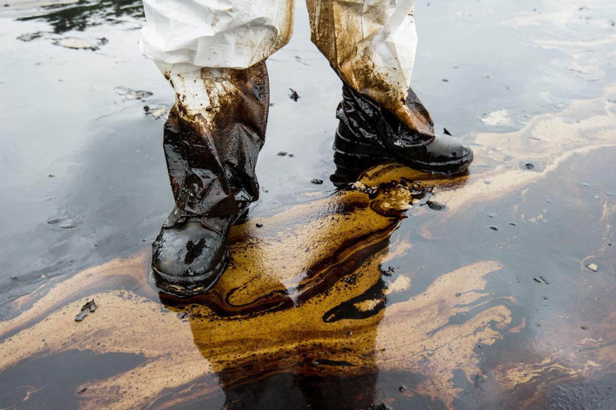 Загиблі морські тварини: на Камчатці екологічна катастрофа