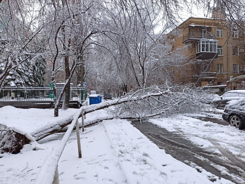 Впало 500 дерев, постраждали майже 60 осіб, на допомогу підняли військових: вражаючі кадри обледеніння Одеси