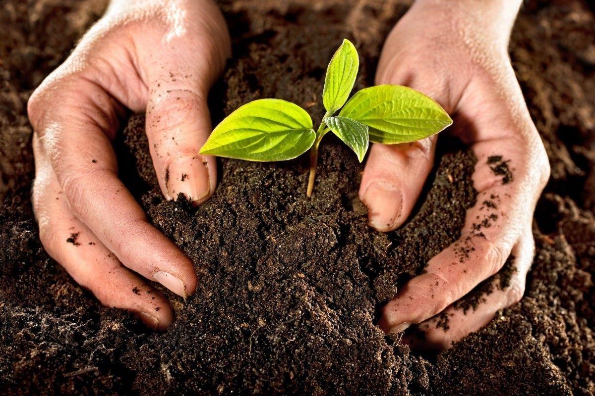 Який ефект забезпечують ґрунтові біодобрива