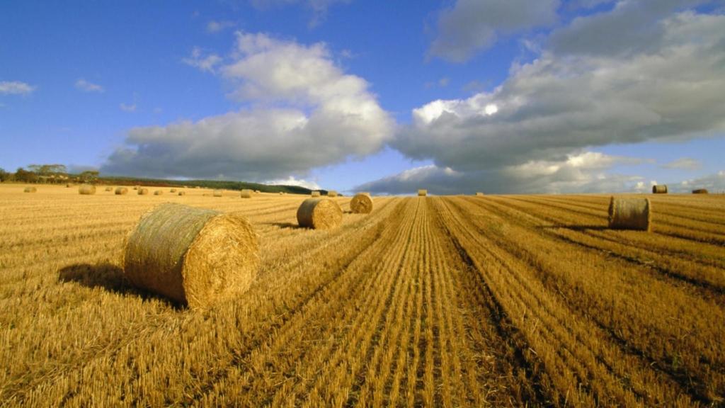 Ринок землі запрацював: як купити або продати землю за новим законом