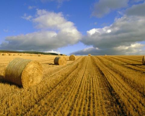 Ринок землі: в яких областях масово скуповують ділянки