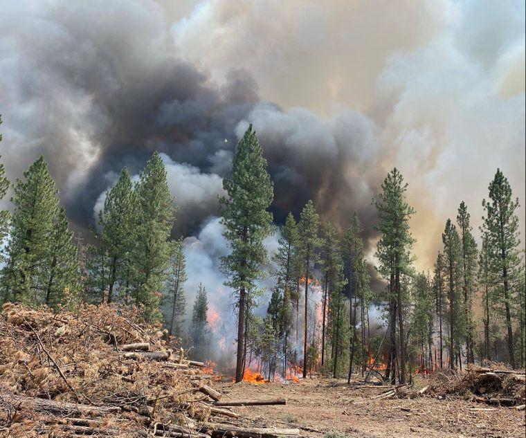 Огонь уничтожил 485 тысяч гектаров леса: в США бушуют лесные пожары