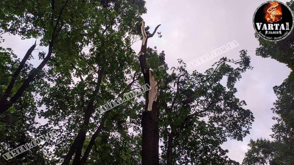 Во Львове во время урагана парня с девушкой убило дерево