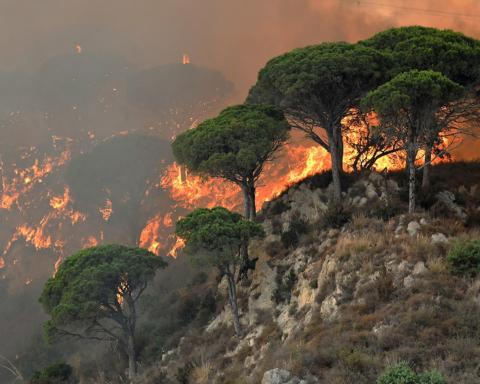 Лісові пожежі охопили південь Італії: троє загиблих