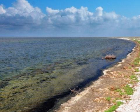 У Криму на озера Сиваш загинули тисячі птахів: озвучено причину