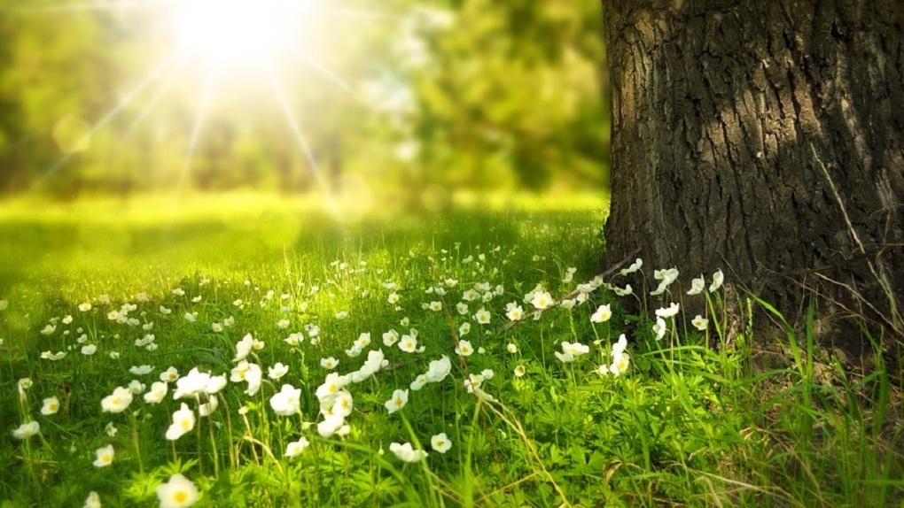 Справжнє «бабине літо»?: прогноз погоди на 9 вересня