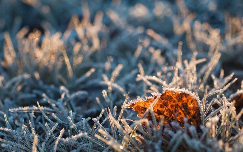 Заморозки і сильний вітер: прогноз погоди в Україні на вихідні