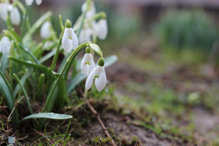 Майже без опадів, але прохолодно: прогноз погоди в Україні на суботу