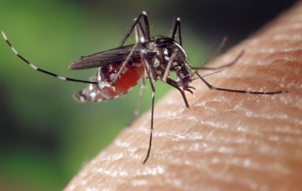 Як позбутися від комарів раз і назавжди: методи, які працюють
