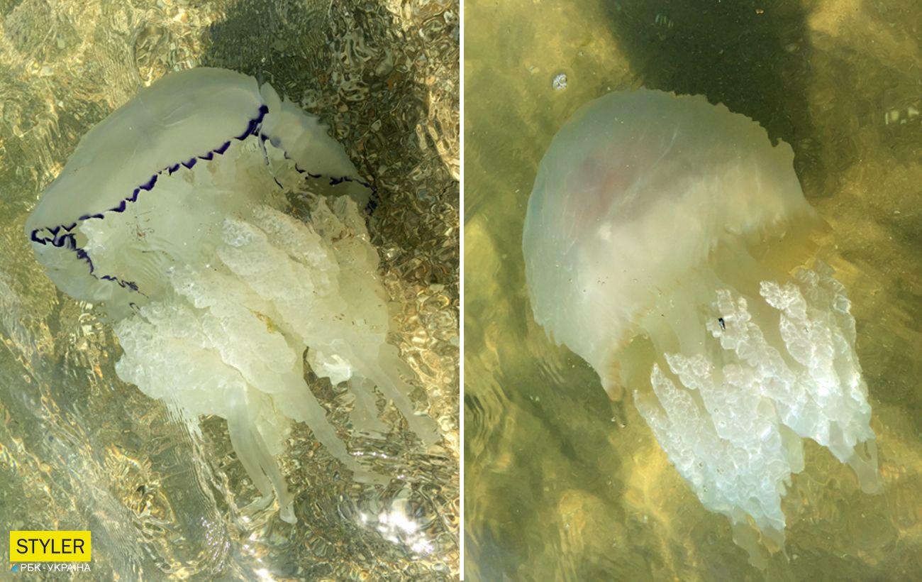 """Нашестя медуз на курорти Азовського моря: відпочивальники показали """"правдиве"""" відео"""