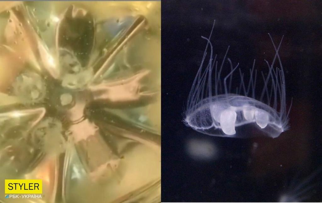У річці Дніпро під Черкасами виявили медуз: відео мікроскопічних жителів