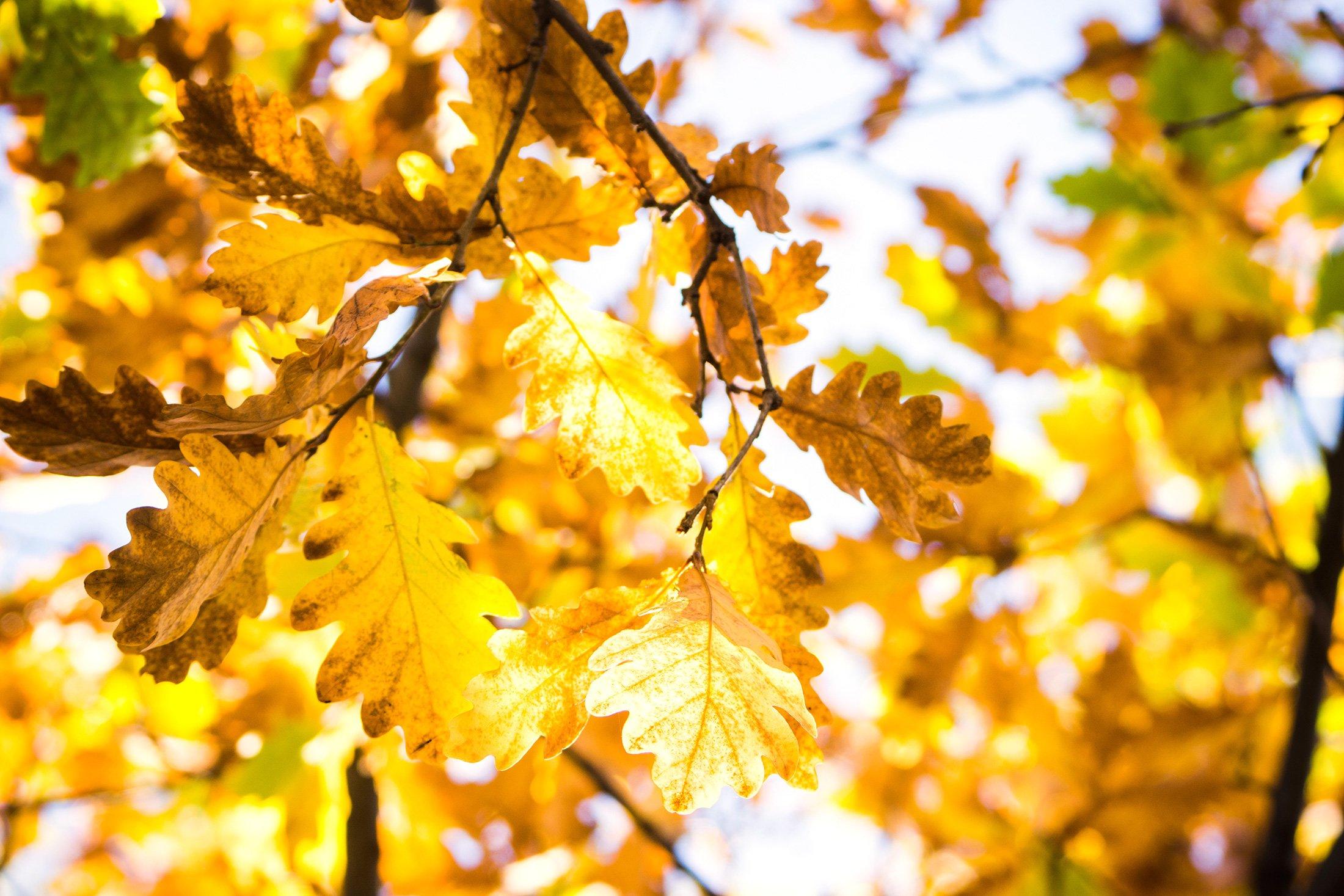 Погода 23 жовтня: в Україні тепло та сонячно