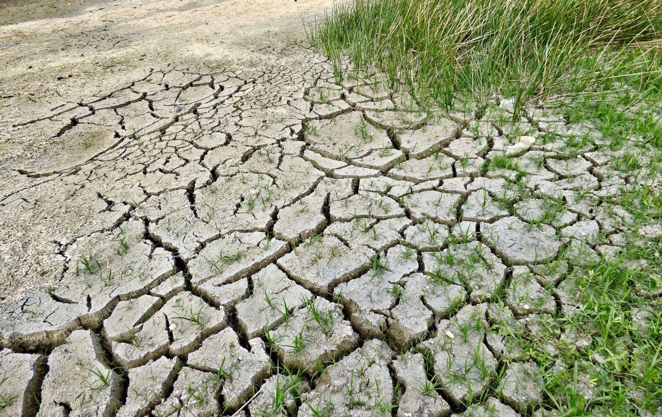В Украине через 30 лет вырастет пустыня: ученый шокировал прогнозом