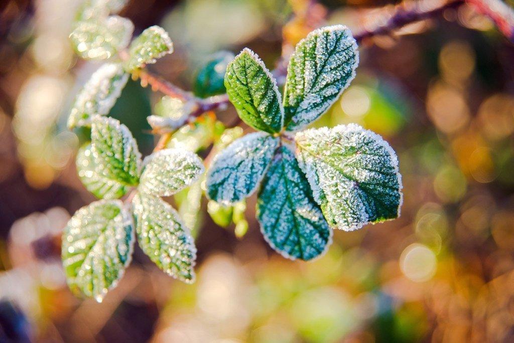В Україні увірвуться перші заморозки: синоптик озвучила прогноз погоди