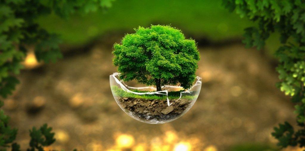 ЗНО-2020: опубліковані правильні відповіді з біології — фото