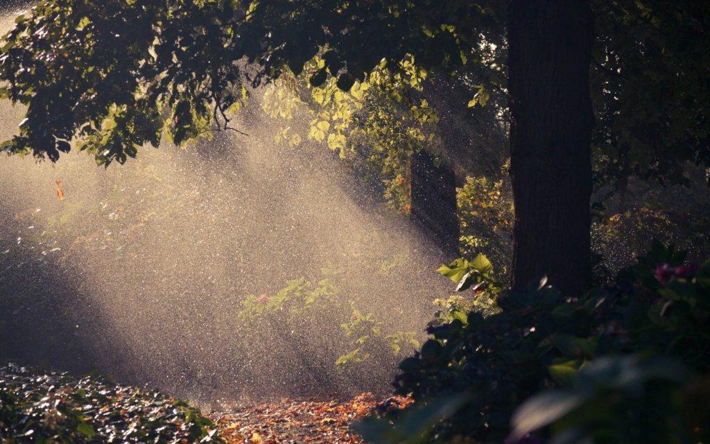 Україну накриють грозові дощі: прогноз на вихідні