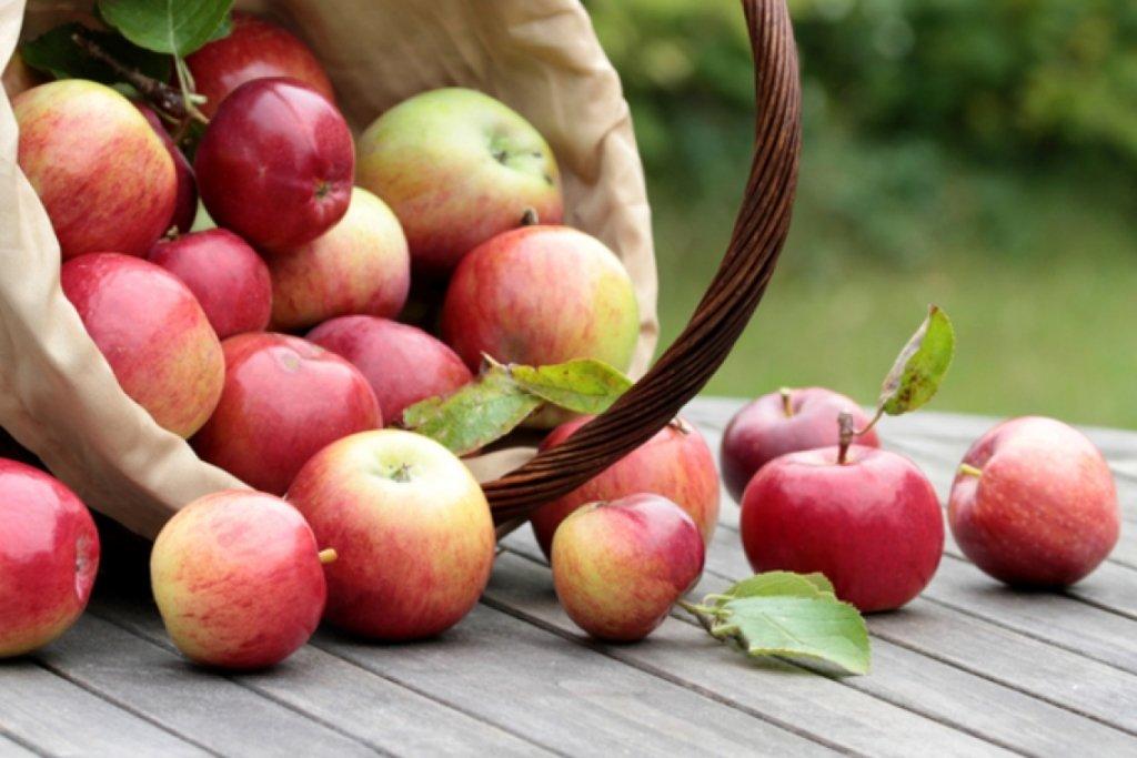 Яблучний Спас 2020: прикмети і традиції на Преображення Господнє