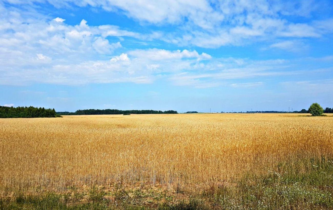 Названа средняя стоимость продажи земли за первый месяц от старта рынка