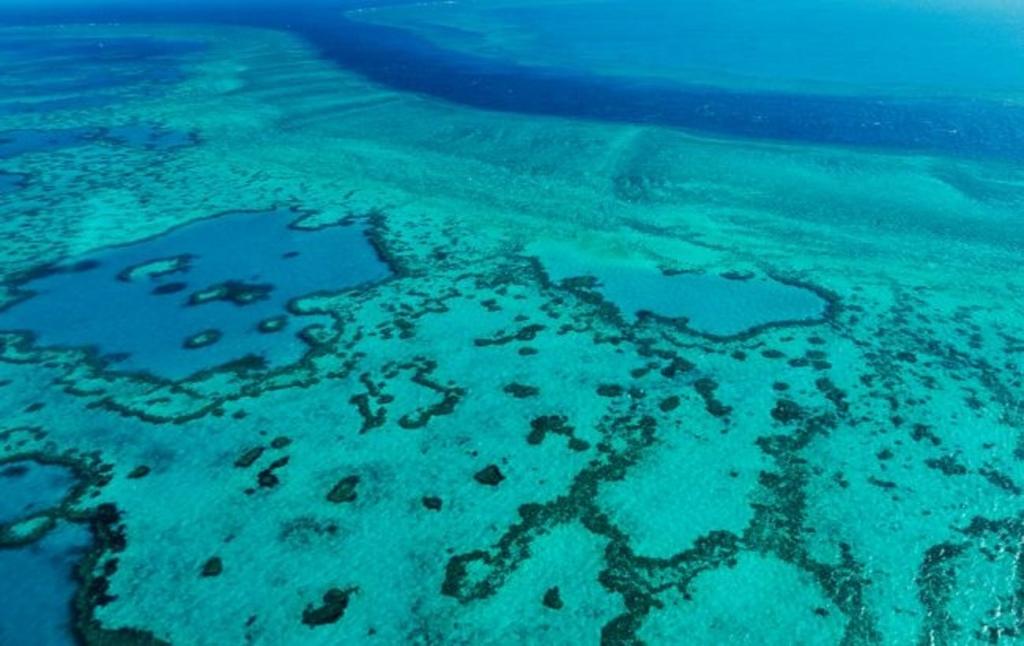 ЮНЕСКО не включив Великий Бар'єрний риф в список Всесвітньої спадщини, що знаходяться під загрозою