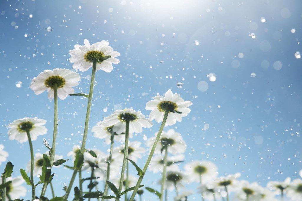 Райська погода: синоптик озвучила прогноз на 16 липня