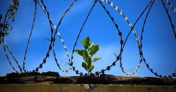 Розпродаж в'язниць: Малюська виставив вже третю виправну установи на продаж
