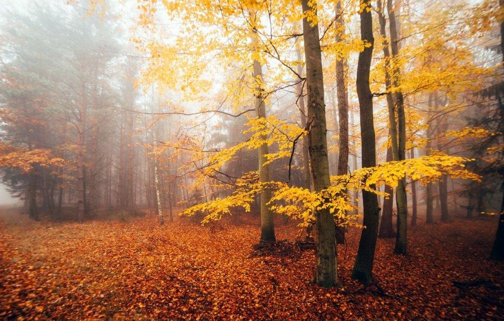 Літо триває: синоптики озвучили прогноз погоди на вересень