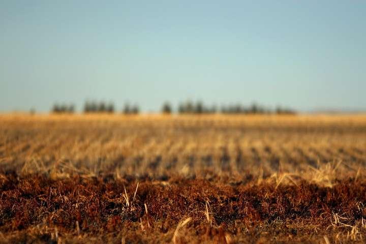 Земельний податок 2021: ставки, пільги, коли платити