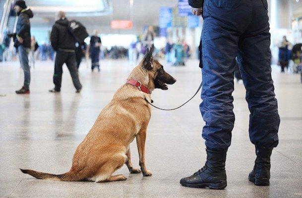 В аеропортах хворих COVID-19 будуть обчислювати за запахом: деталі нововведення