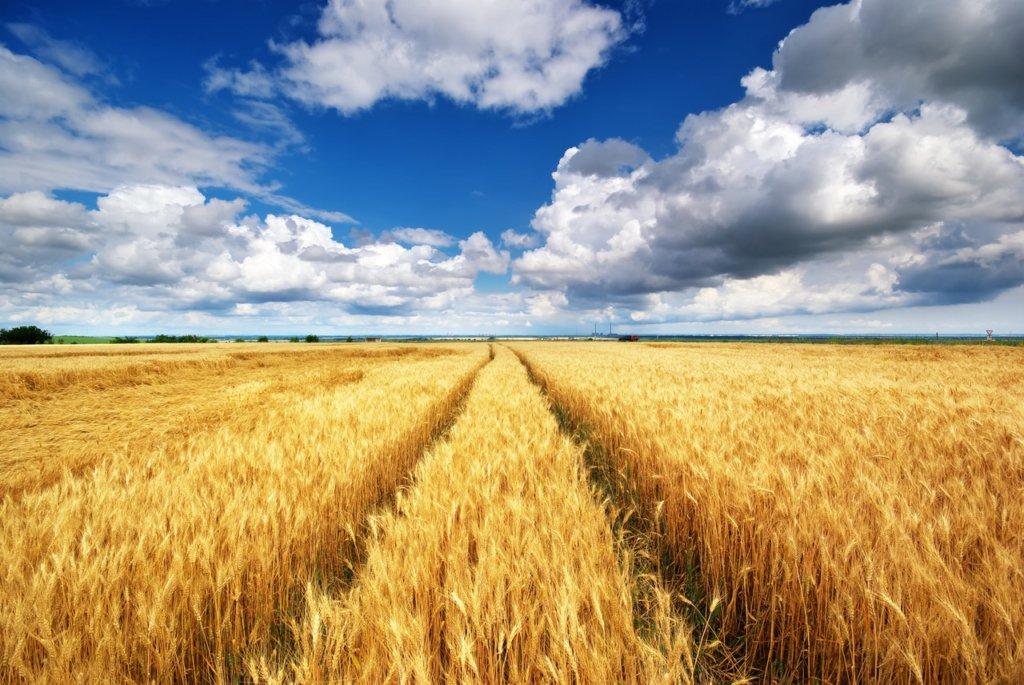 В Україну йде похолодання і дощі: озвучений прогноз погоди на 12 серпня