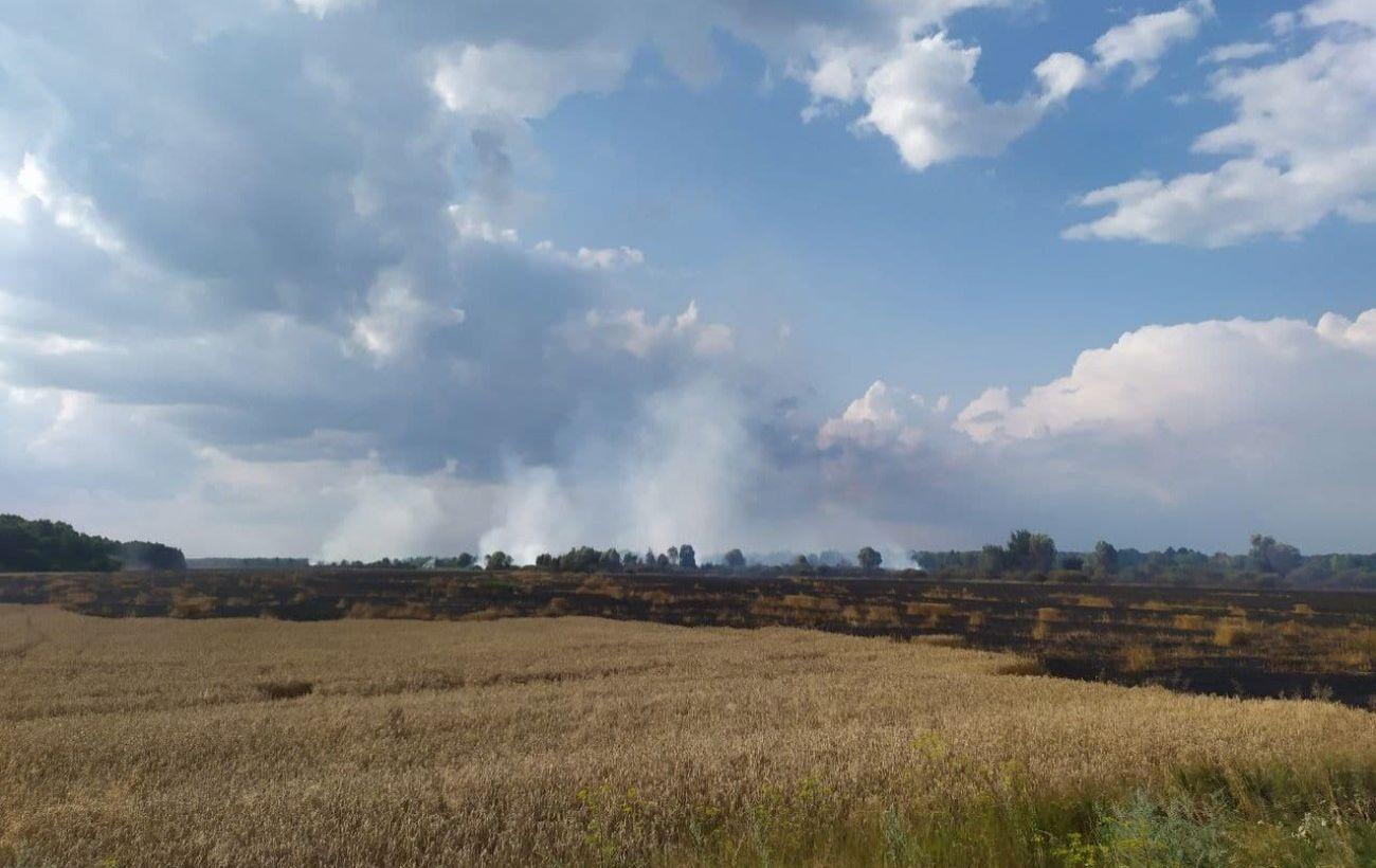 У Чернігівській області горить пшеничне поле